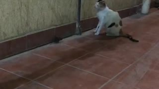 A cat and mouse playing amazing