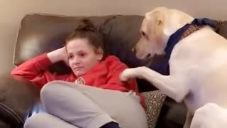 Needy dog humorously demands owner's attention