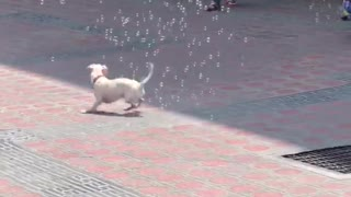 Puppy Playing with Soap Bubbles