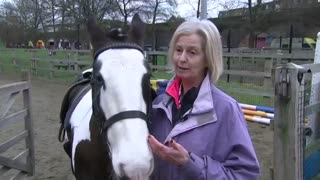 Horses Can Read Human Emotions! - Video