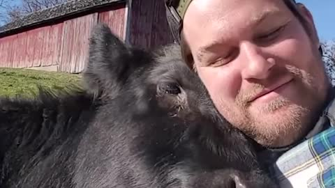 The Funny Guy Selfie With A Cow