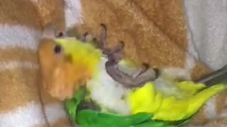 Parrot Playing His Favorite Game