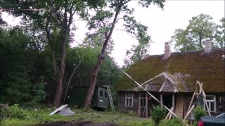 Professional arborists at work, again  - Video