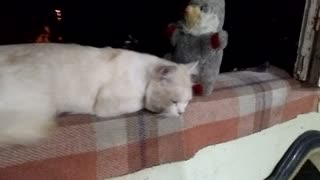 Kitten sitting with her toy