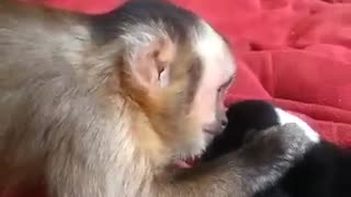 Monkey meets adorable puppies for the first time - Video