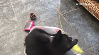 Black cat in bucket playing with yellow toy - Video