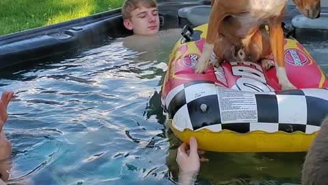 Cutest pup enjoying the hot tub with the boys