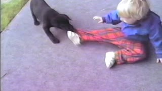 Energetic puppy takes down toddler - Video