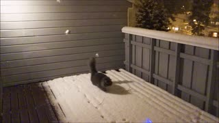 This cat absolutely loves to play in the snow! - Video
