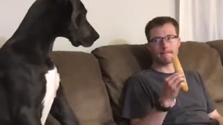 This big doggy gets an attitude when owner won't share food