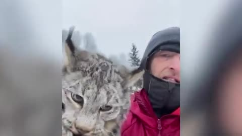 Canadian farmer gives lynx a polite lecture after it raided his chicken coop