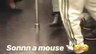 A mouse runs around subway car people scream