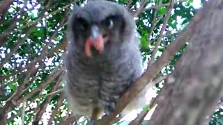 Feeding the Owl - Video