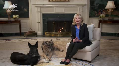When The Dogs Are More Intelligent Than The First Lady