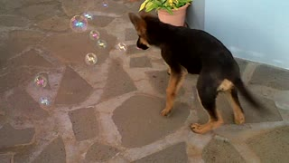 Bubbles and dogs - Video