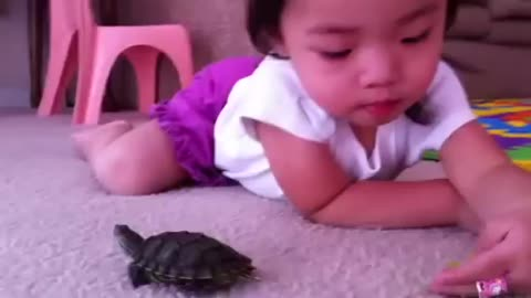 Tea trying feeding turtle of bayby 2 years old