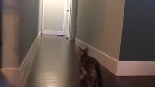 Case plays fetch with a giant plush fish!  - Video