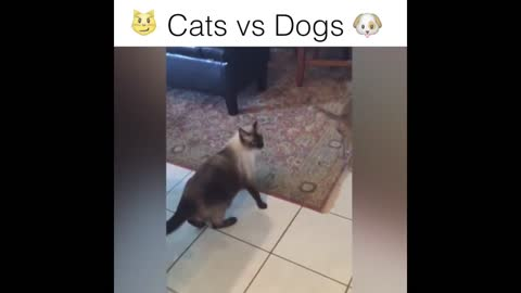 FUNNY DOG and CAT Videos Cats vs Dogs Compilation