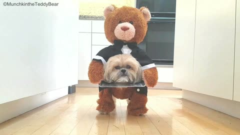 Munchkin the Teddy Bear's 'head on a platter' Halloween costume