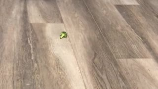 husky vs broccoli  - Video