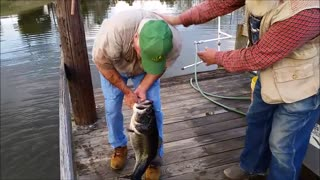 Record Bass Caught By Hand!