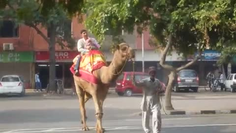 Enjoing on camel with his baby