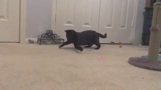 Adorable Slo Mo Cats - Video