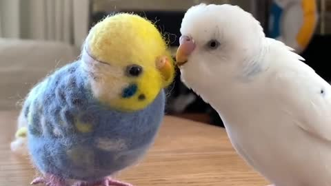 Cute parrot tries to play with his toy friend