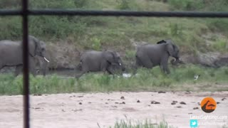 Baby elephant takes adorable tumble down hill - Video