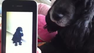 Dog howls at video of himself howling