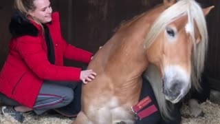 Joyful Horse Smiles While Getting Scratches From Her Human  - Video