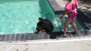 Giant dog plays fetch in pool with little girl - Video