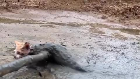 Rescue the kitten trapped in the mud