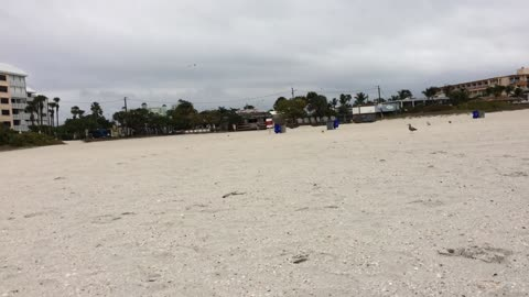 Vacationing Woman Swarmed By Seagulls On The Beach