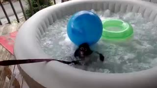 Spider Monkey enjoys relaxing jacuzzi - Video