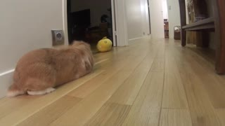 When your Pimousse TheBunny doesn't want to play  - Video