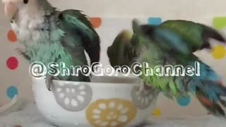 Two fluffy dinosaurs enjoying their bath time  - Video