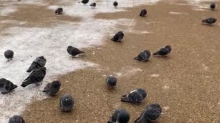 Birds in London snow today 2021 ❄️❄️