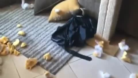 Guilty pup creates fantastic mess while owner was away