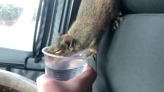 Scrat drinking his water from Taco Bell.