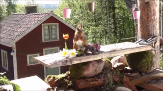 squirrel photo workshop - Video