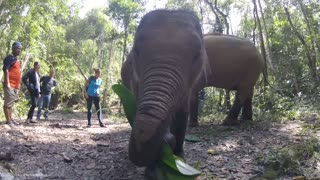 Hand feeding a greedy little baby elephant