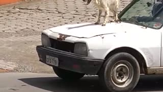 Barking Hood Ornament - Video