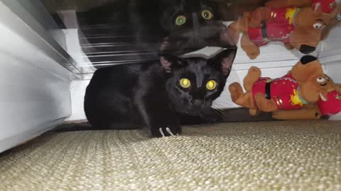 2 Black Cats play in window behind the couch