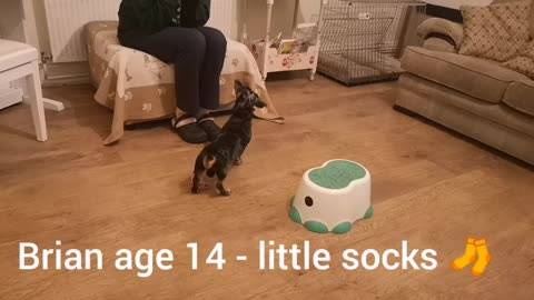 Whoever said an Old Sausage Dog can't Learn New Tricks , Brian age 14