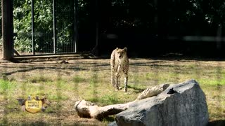 Wildlife World Zoo - The Difference Between Animal Rights and Animal Welfare