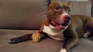Diesel Pit Bull ft Lil Bird  - Video