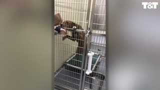 Woman Reunited With Dog Lost For More Than Two Years