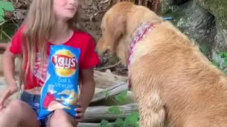 Girl Sharing potato chips with her golden retriever