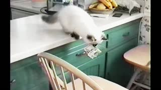 Kitten Gets Caught Stealing Money From A Purse And Hiding It - Video